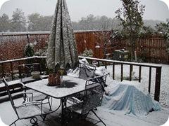 snow Dec 4 009